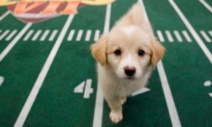 at-the-puppy-bowl-ix-everyones-a-winner